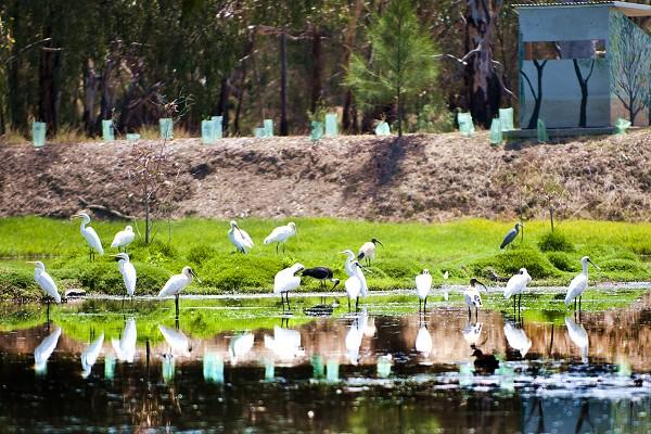 project-wetlands