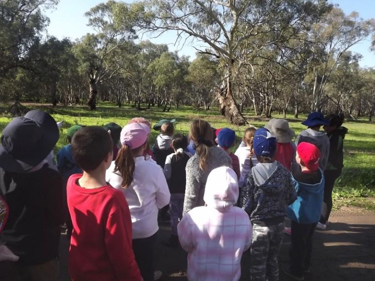 tours-koala-spotting-tours