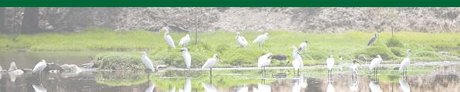 Narrandera Wetlands