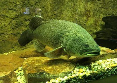 Narrandera Fisheries Centre