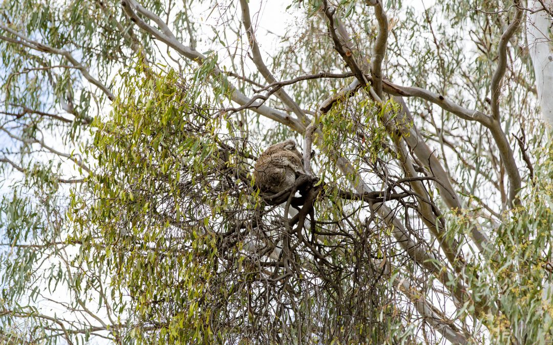 Narrandera Flora and Fauna Reserve